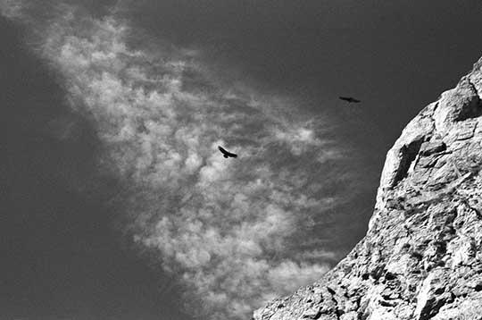 Condores-1